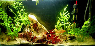 Complex Aquarium Habitat with Sand Plants and caves