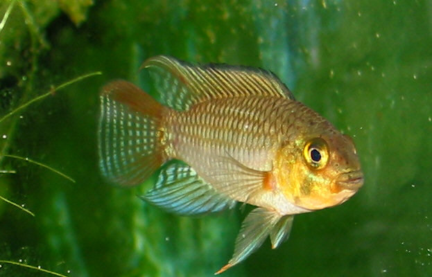 aquarium fishes images. great aquarium fish that